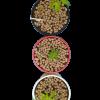 Arlita  sustrato Sustratos Orgánicos Vivir para sembrar