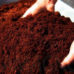 Sustrato de coco lavado para semilleros 1kg Sustratos Orgánicos Vivir para sembrar