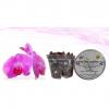 Matera trasparente  Con Sustrato Ideal Para Trasplantar Tus Orquídeas Materas Plásticas y accesorios Vivir para sembrar